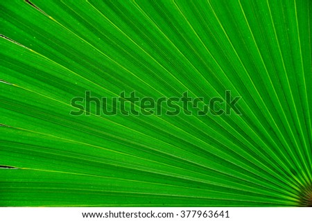 Palm tree leaf close up. Abstract green background - stock photo