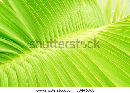 Palm tree leaf detail - stock photo