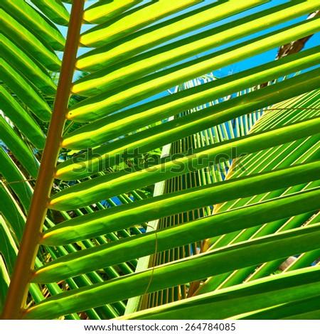 Palm tree leaf on beach at Seychelles, La Digue - stock photo