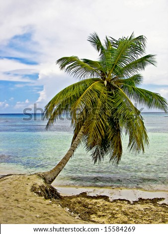 Palm tree leaning of the edge of an beautiful tropical shoreline. - stock photo