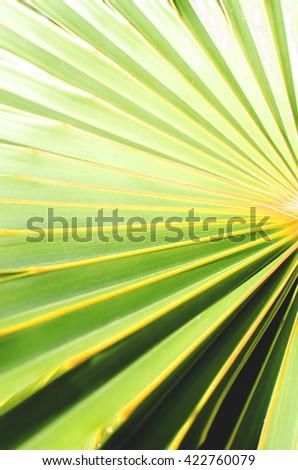 Palm Tree leave  - stock photo