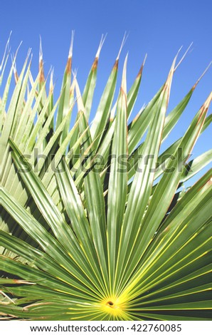 Palm Tree leave and sky - stock photo