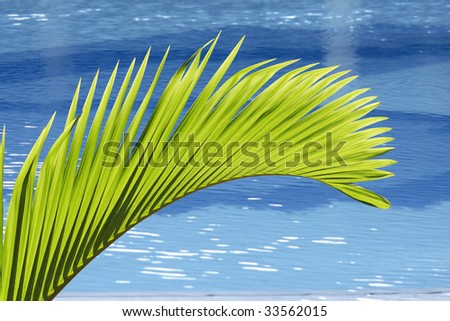 Palm tree leave and swimming pool - stock photo