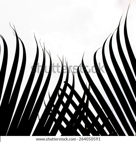 Palm tree leave black and white - stock photo