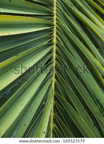 Palm tree leave of a garden. Showing the details of the structure. Landscape design. Texture. Nobody - stock photo