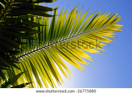 Palm tree leaves against a bright blue sky
