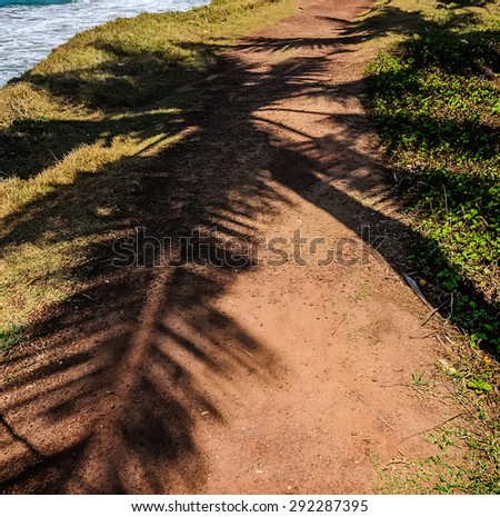 Palm tree leaves cast shadow on an orange textured sand. India. - stock photo