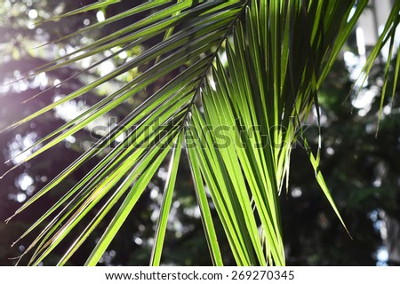Palm Tree Leaves in Sunlight - stock photo