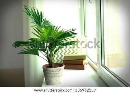 Palm tree (Livistona Rotundifolia) in flowerpot on windowsill at home - stock photo