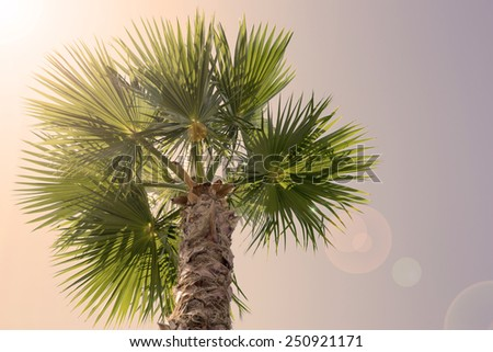 palm tree on a background of clear sky - stock photo