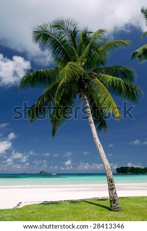Palm tree on a background of the sea