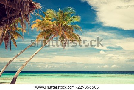 palm tree on a background of tropical turquoise sea - stock photo