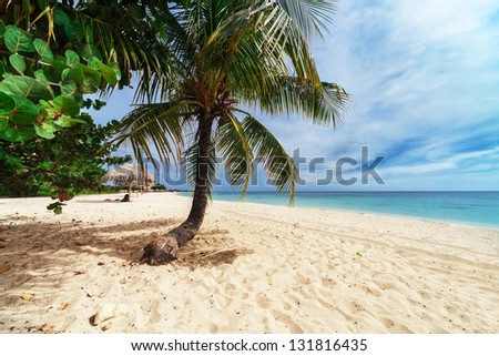 palm tree on a beach on a sunny day - stock photo