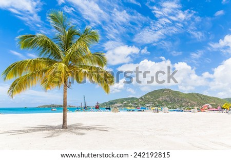Palm tree on a beautiful beach near Philipsburg, St Martin - stock photo