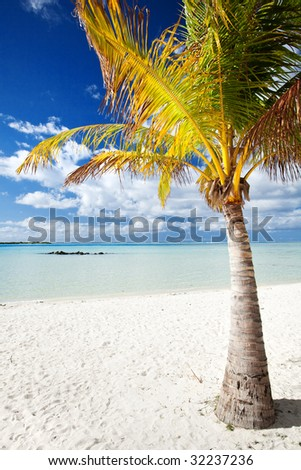 Palm tree on a deserted tropical beach with blue water