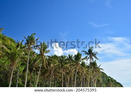 Palm tree on a tropical beach - stock photo