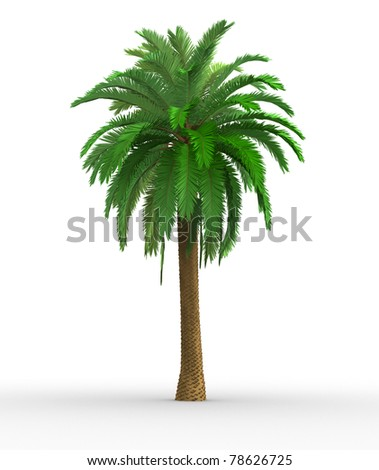 Palm-tree on a white background. This is a 3d render illustration