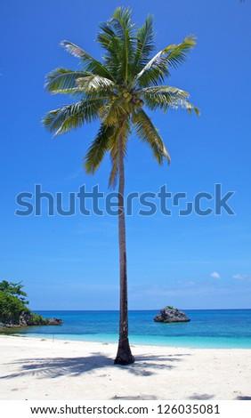 Palm tree on a white sand tropical beach on Malapascua island, Philippines - stock photo
