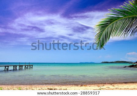 Palm tree on beach - stock photo