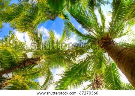 palm tree on blue sky and white clouds - stock photo