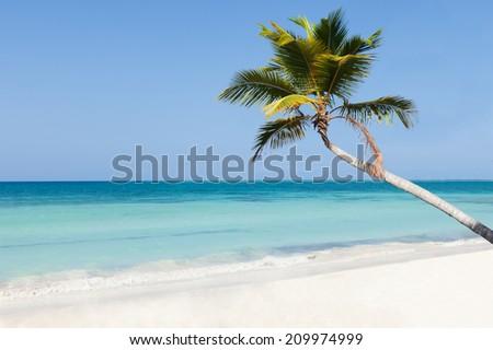 Palm tree on calm beach against clear blue sky - stock photo