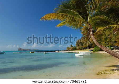 Palm tree on calm exotic beach on Mauritius Island - stock photo