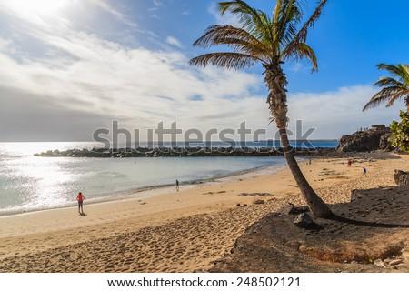 Palm tree on Flamingo beach in Playa Blanca on coast of Lanzarote island, Spain - stock photo