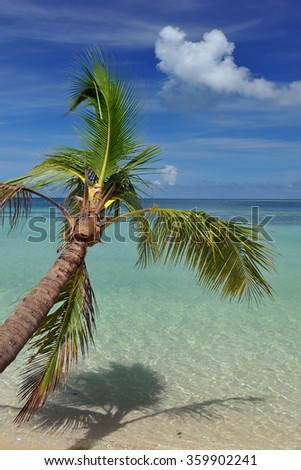 Palm tree on island in Fiji