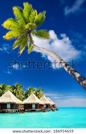 Palm tree on Moorea Island hanging over blue lagoon - stock photo