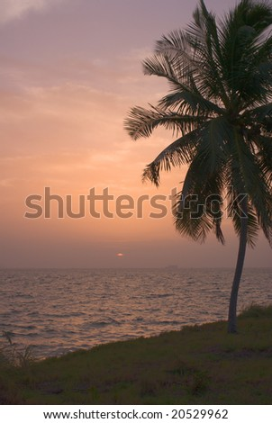 Palm Tree on Peaceful Beach and Tropical Sunset