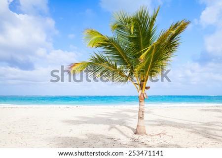 Palm tree on sandy beach. Coast of Atlantic ocean, Dominican republic - stock photo