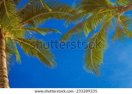 palm tree on sky background - stock photo