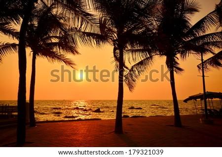 Palm Tree on Sunset Beach  - stock photo
