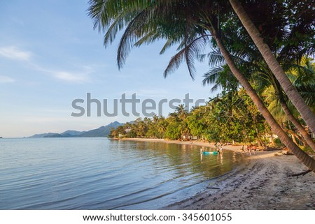 Palm tree on the beach at sunset  - stock photo