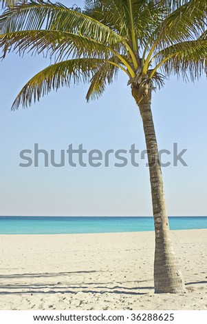 Palm tree on the beach in Miami Florida