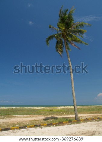 Palm tree on the beach, Kuantan, Malaysia - stock photo