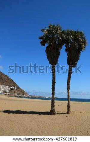 Palm tree on The beach of San Jose in The Natural park of Cabo de Gara - Nijar , Almeria , Spain  - stock photo