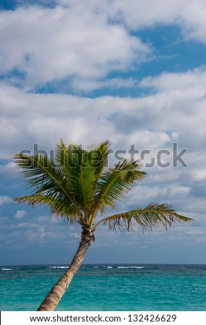 Palm Tree on the Beach, Punta Cana, Dominican Republic (Portrait) - stock photo