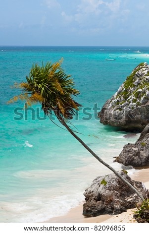Palm tree on the cost of Tulum - Mexico - stock photo