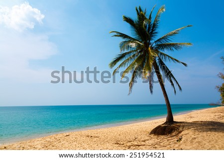 Palm tree on the seashore, a sandy beach - stock photo