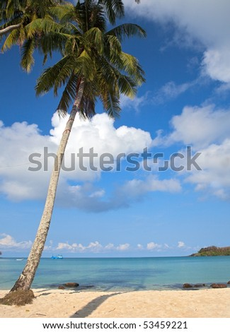 Palm tree on the seaside under blue sky with clouds