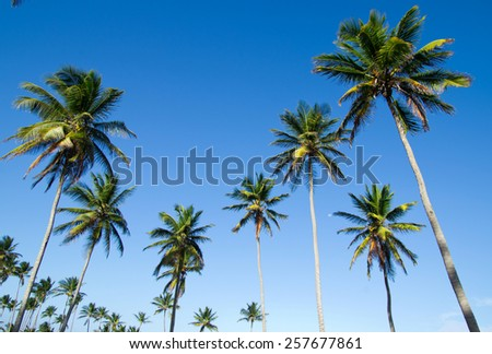 Palm tree on the sky - stock photo