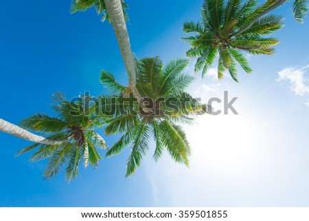 Palm tree on the sky - stock photo