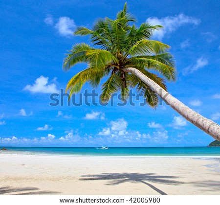 Palm tree on the tropical beach near sea water with blue sky background
