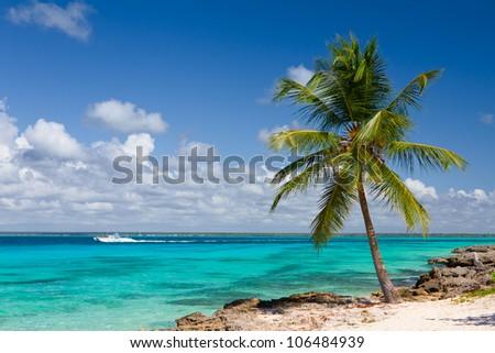 Palm tree on the tropical beach, Saona Island, Caribbean Sea - stock photo