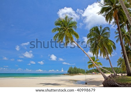 Palm tree on the white sand - tropical nature, summer beach, family holiday