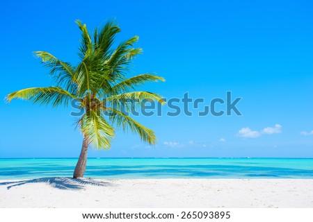 Palm tree on tropical beach - stock photo