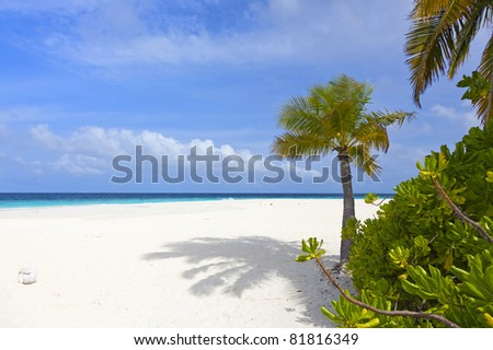 palm tree on tropical beach in front of turquoise ocean