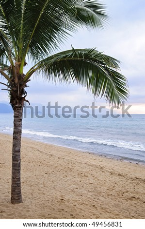 Palm tree on tropical beach in Puerto Vallarta, Jalisco, Mexico - stock photo