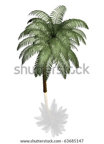 Palm tree on white background with reflection - stock photo